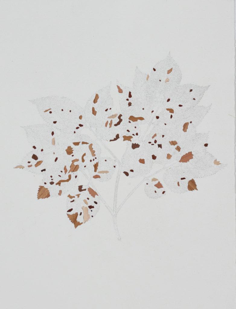 Marianne Lang Baumfrevel Nr. 01 40x30cm Bleistift mit Holzintarise, 2016