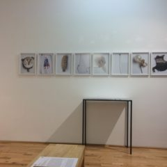 Linda Berger, Fundstücke, C-Print, 2AP, signiert, 30x40 cm, 2016
