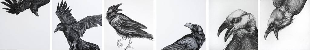 Birgit Pleschberger, Raben, ab 2017, Nero auf Papier, 6er Serie 25x25cm